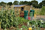 Shed on an allotment