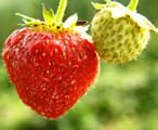 A close up picture of a strawberry