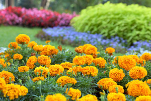 Orange-bedding-flowers