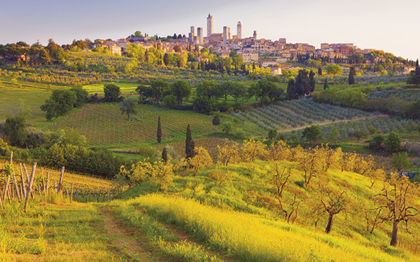 Vineyards on the outskirts of San Gimignano, Tuscany