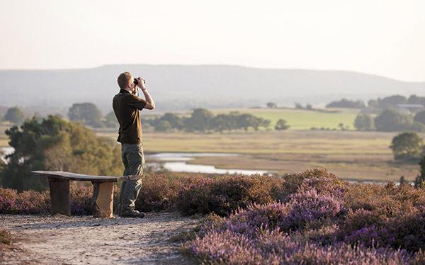 Birdwatcher at Arne RSPB Reserve