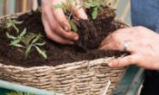 Top five gardening jobs for Easter