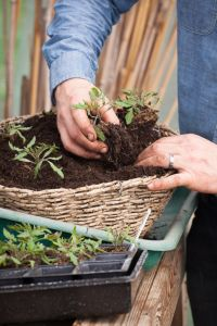 Plant up a hanging basket