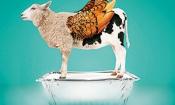 Will new Food Crime Unit combat food fraud?