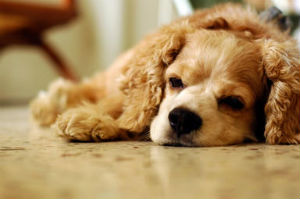 sad puppy lying on ground