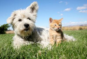 cat and dog sitting in a field