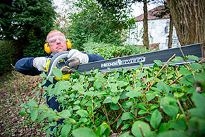 Cutting the top of a hedge with a Ryobi hedge trimmer