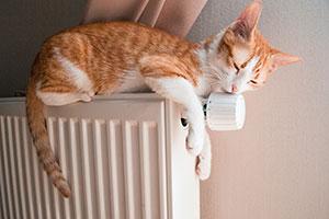 cat balanced on a heating radiator