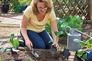 Planting veg