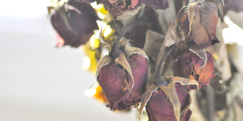 Dried red roses