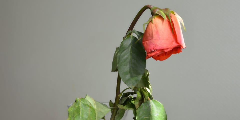Debenhams Flowers suffers cyber attack