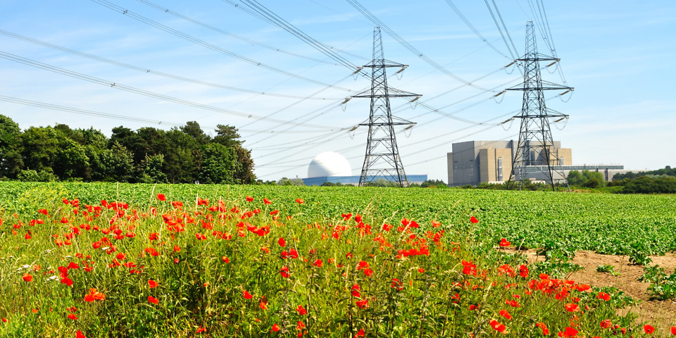 A field with flowers, power lines overhead, coming from the nuclear power station in the background.