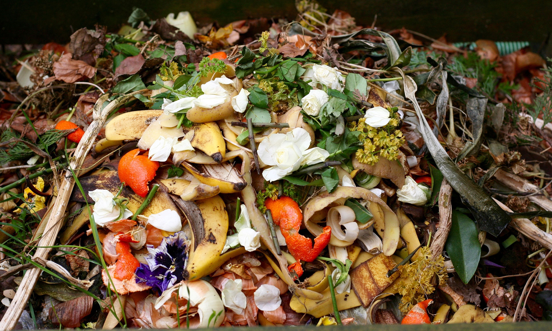 New pledge to reduce food waste by 50% from food industry