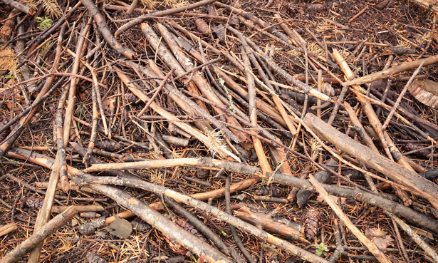 Wood branches on floor