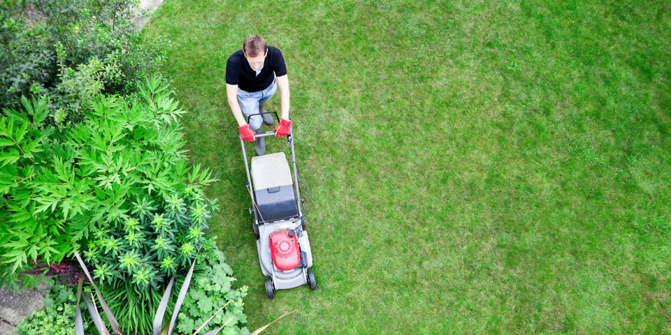 Giving the lawn a cut