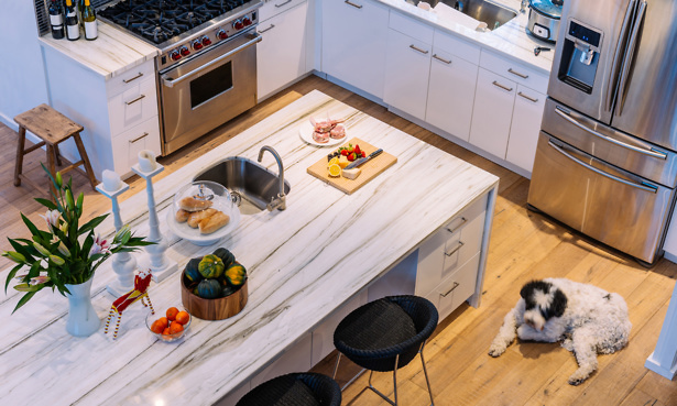 Kitchen with dog