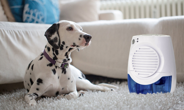 Dehumidifier next to a dog