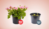 Which? best compost for patio pots is a bargain