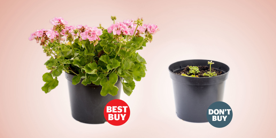The Huge Difference A Best Buy Makes To Your Gardening Success