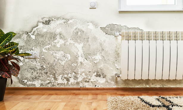 Wall with mould