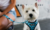 Which dog harness is right for your dog?