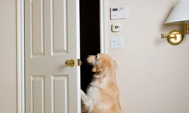 Dog opening a door in a home