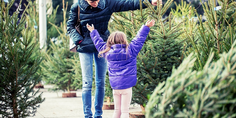 Where Can You Buy The Cheapest Christmas Tree Which News