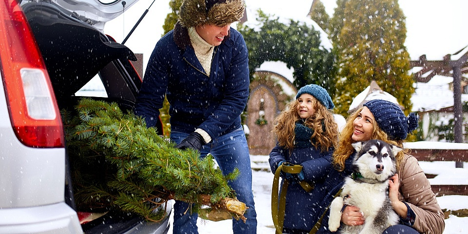 Will your Christmas tree fit in your car?