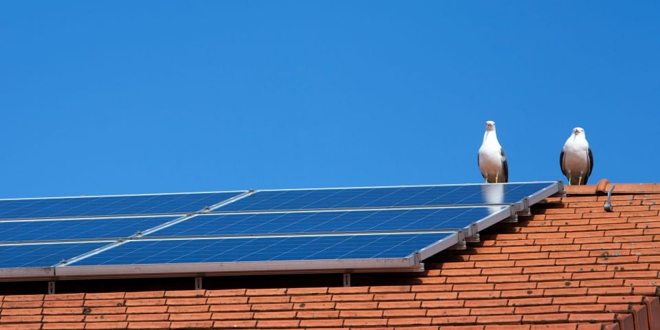 Most common solar panel problems and how to solve them