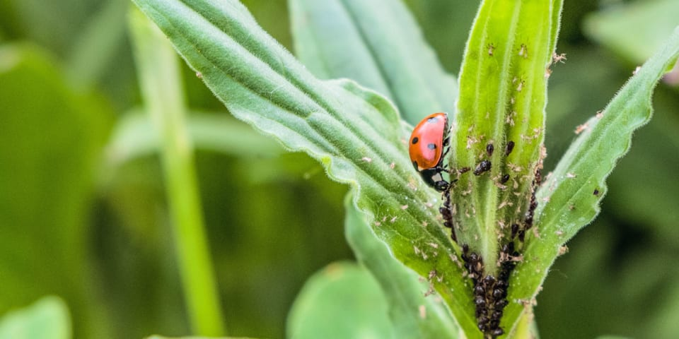 The top five garden pests and what to do about them