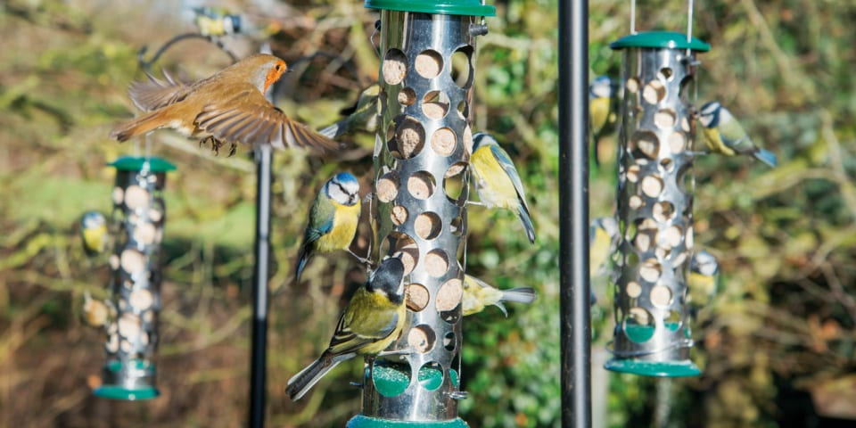Fat balls for birds: are they worth your money?