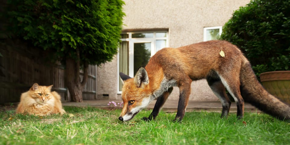 Foxes, cats and squirrels: how to deter them from your garden