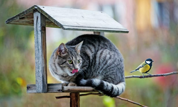 Cat on bird table
