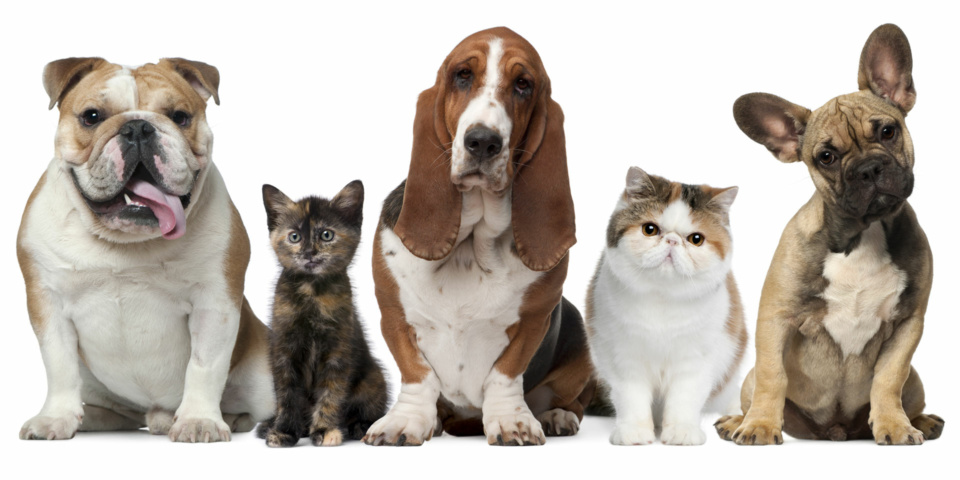 Is your dog or cat overweight?