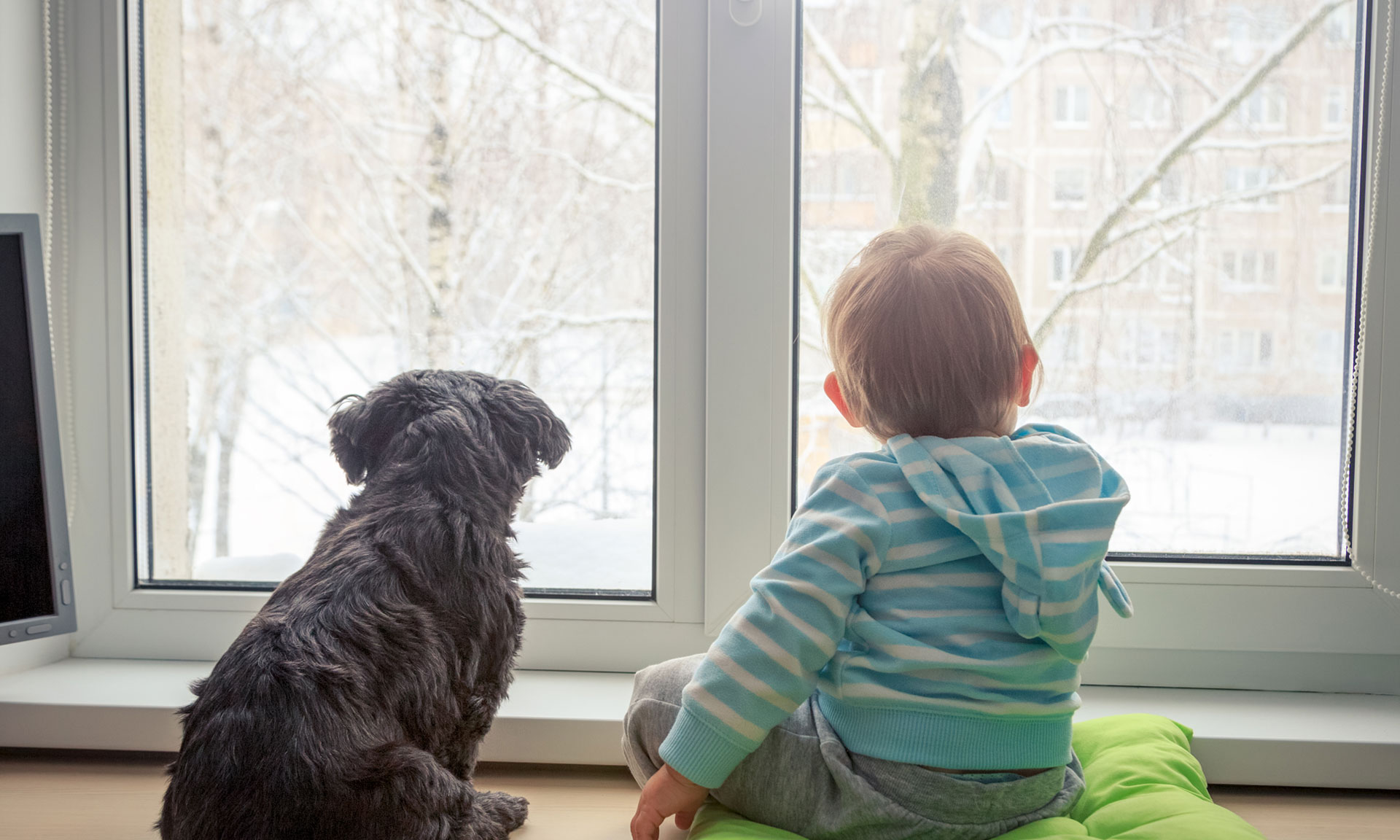 Child and dog looking out of double glazed windows
