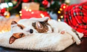 Pet tech for Christmas: GPS trackers, treat dispensers and activity trackers compared