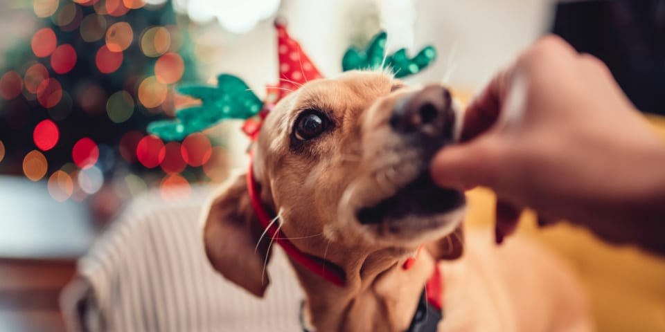 7 Christmas foods you should never feed to your dog