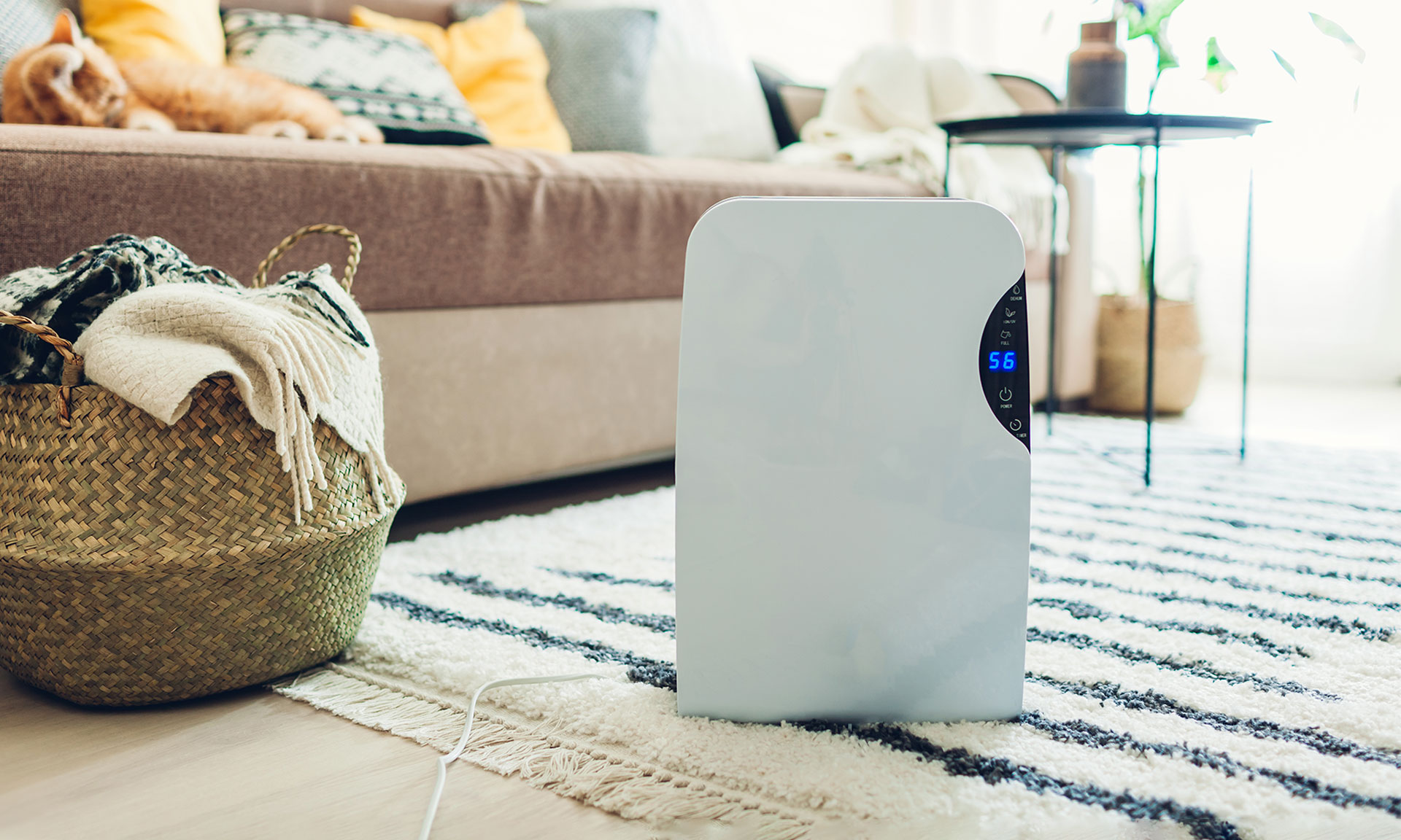 Your dehumidifier questions answered: from when you need