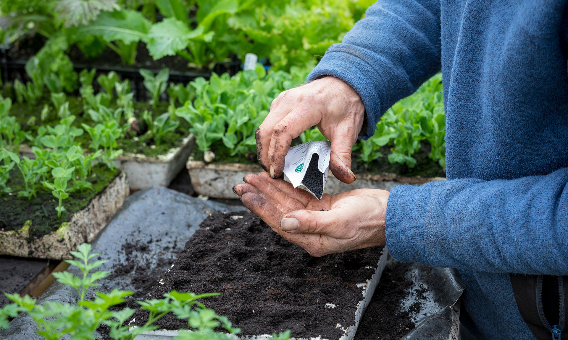 Top veg-growing questions during February – Which? News