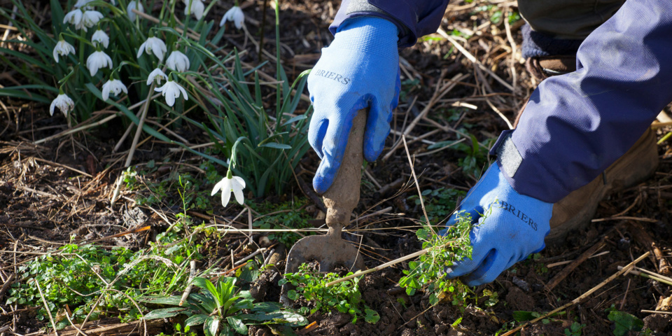 Top gardening problems during February