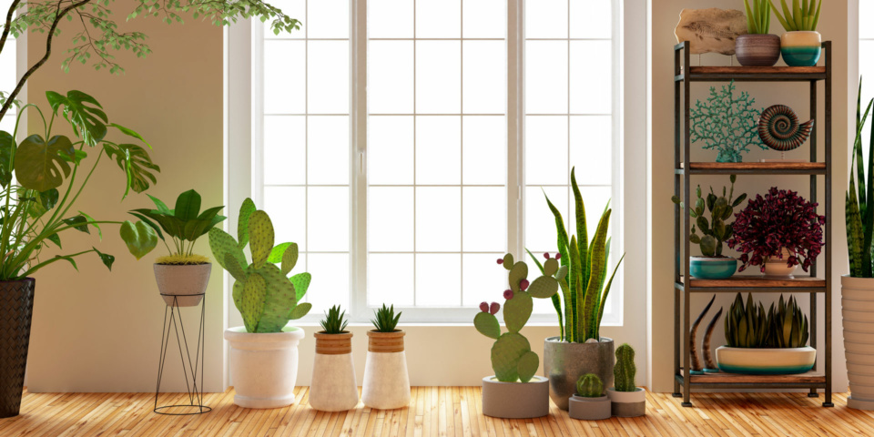 Air purifying plants: do they really exist?