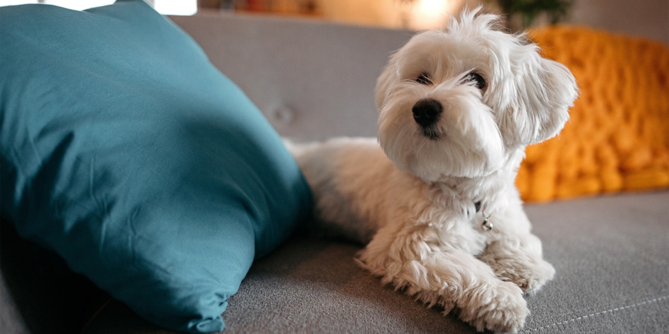A fifth of false burglar alarms are set off by pets
