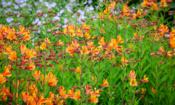 Top gardening jobs for June