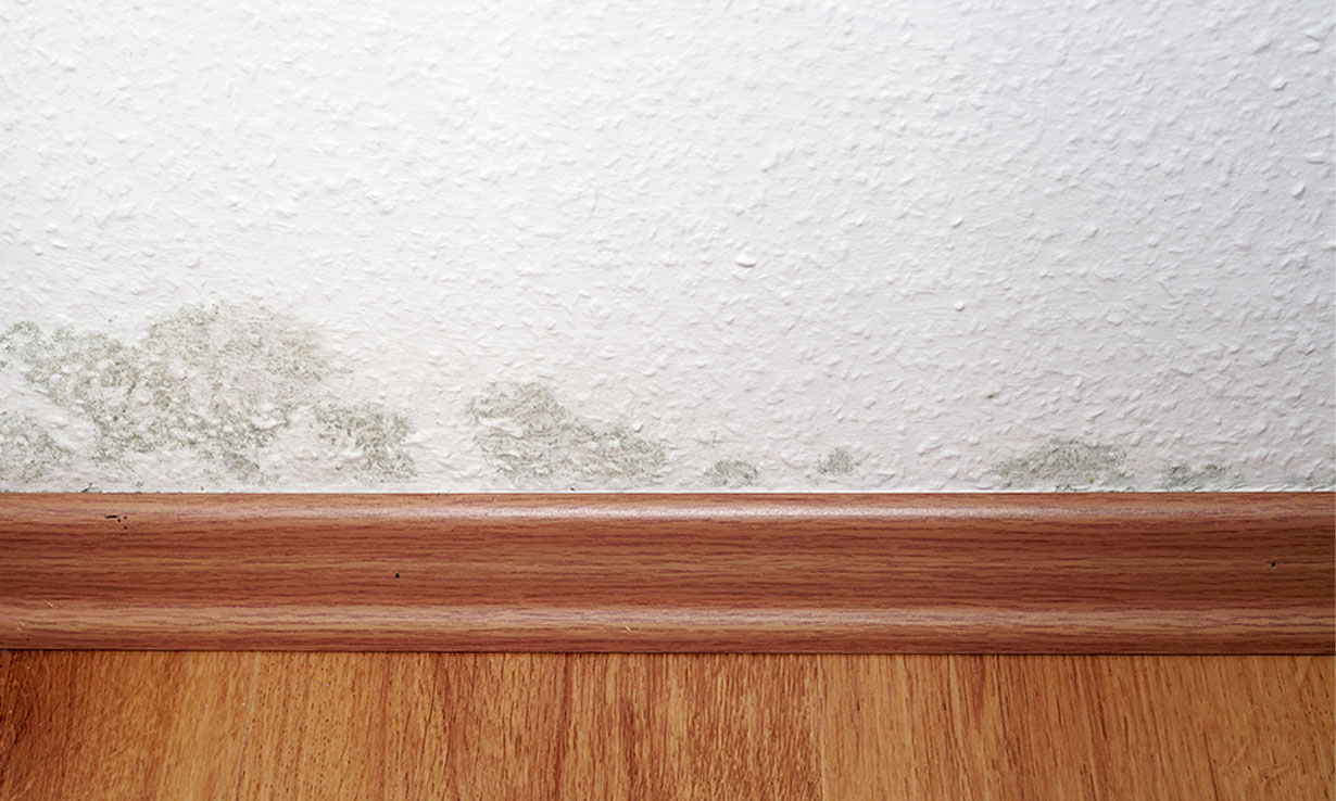 Mould on a wall