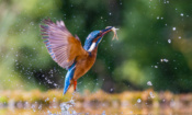 Why you need a proper camera for brilliant bird photography