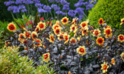 Top gardening jobs for July