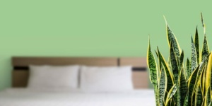 Houseplants in the post: The new way to green up your living space?