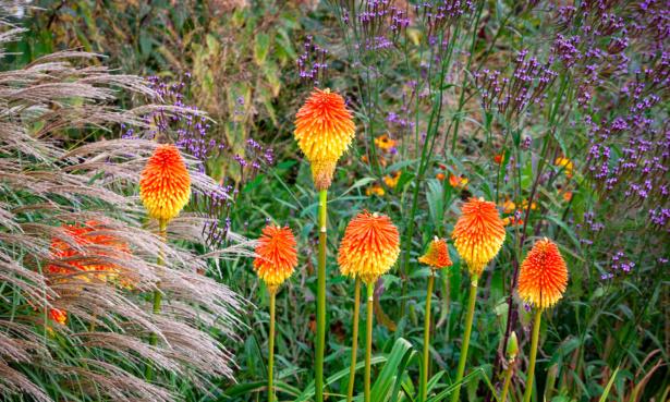 Top gardening jobs for October