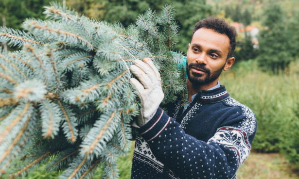 The cheapest place to buy a real Christmas tree in 2020