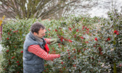 Top gardening jobs for December